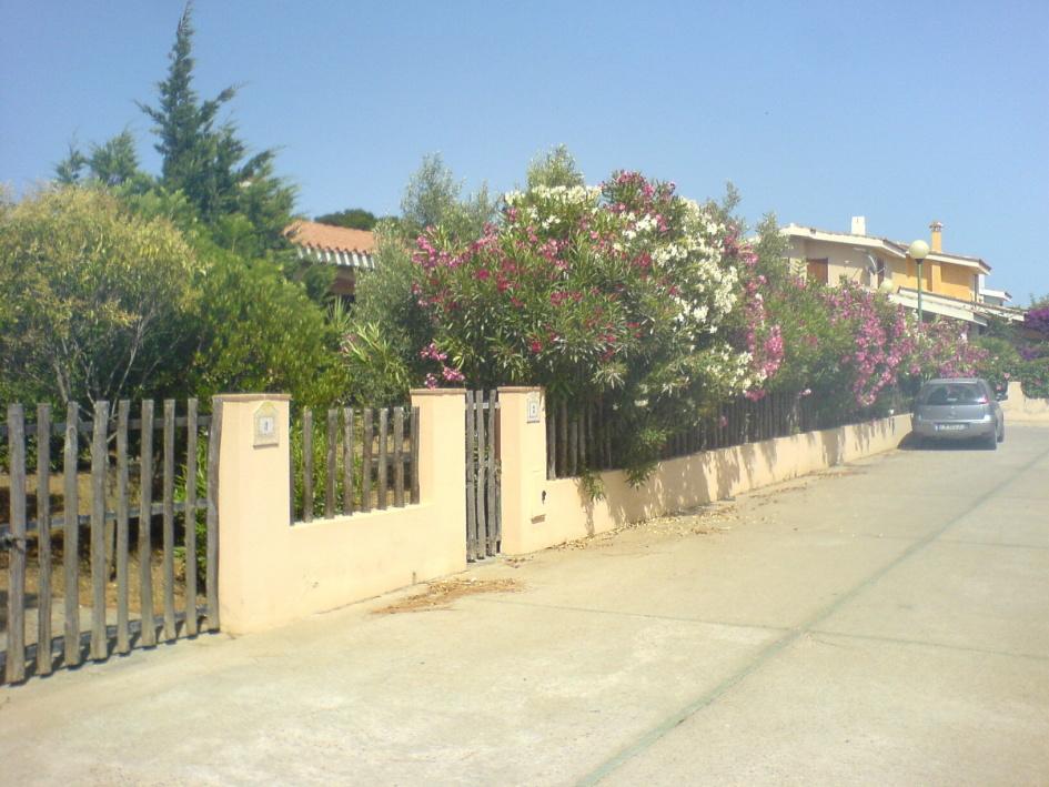 affitto casa vacanze mare villasimius 1099 (1099_2008724155349.JPG)