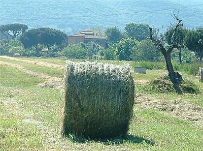 Affitto Casa vacanze Campagna Fiorentina/Baratti/Populonia
